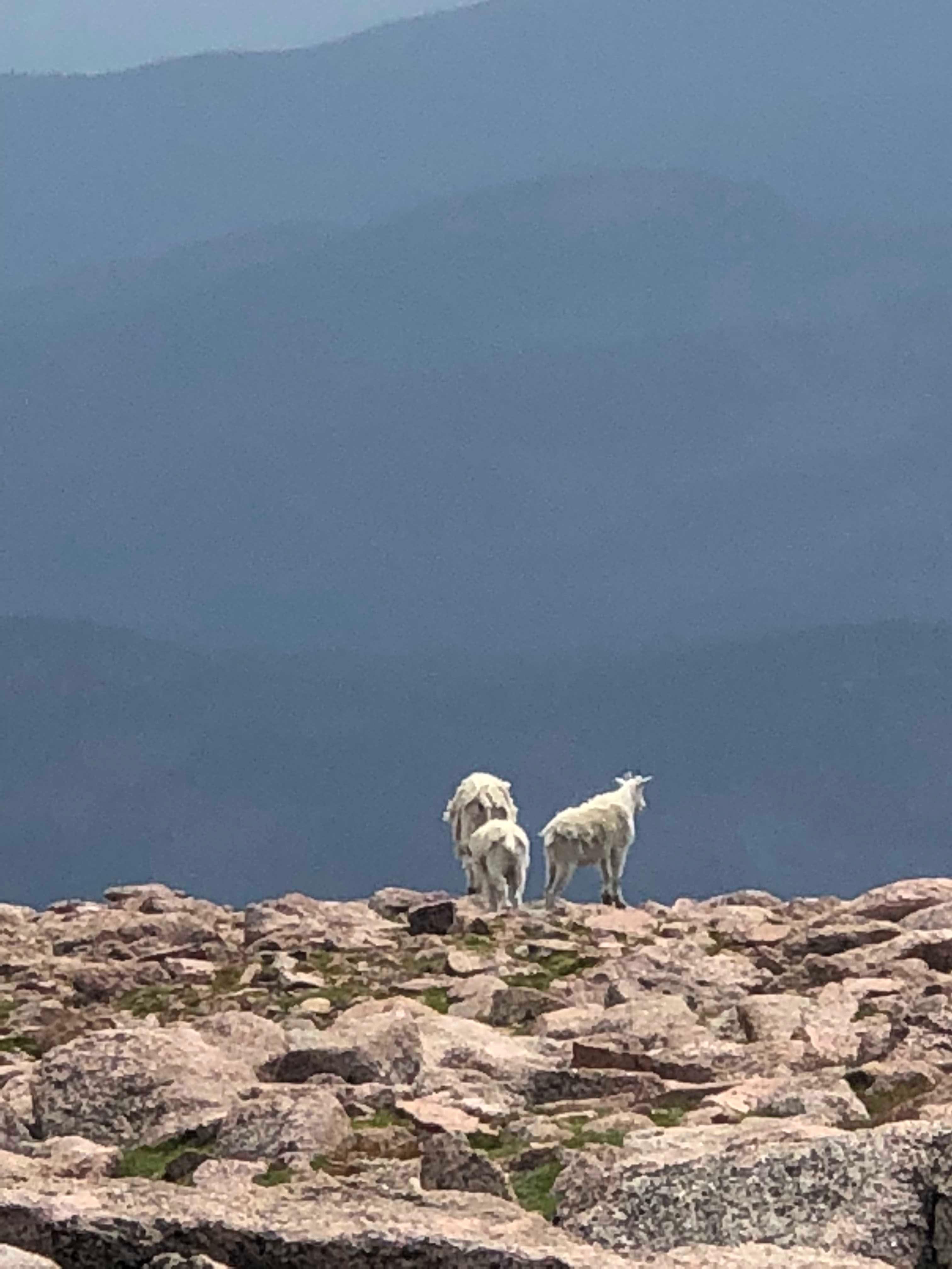 Mount Evans. Colorado valstija.